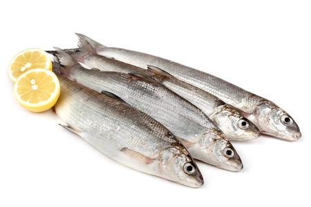whitefish: Raw European whitefish (Coregonus lavaretus) with lemon, isolated on white background.
