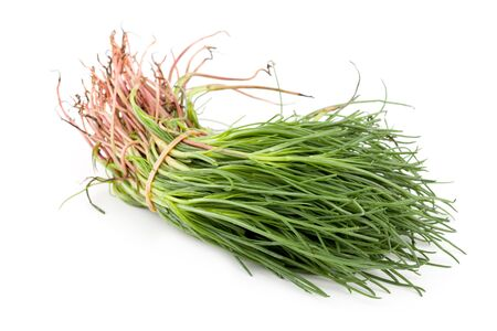 Bunch of opposite-leaved saltwort or salsola soda, Kasher vegetable, isolated on white background.