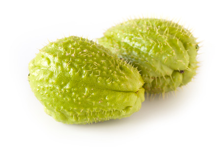 Chayote (Sechium Edule), edible plant belonging to the gourd family. Is known also as christophene or christophine. Stock Photo