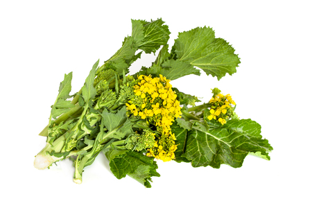 Fresh broccoli rabe, leaves and inflorescence, isolated on white background. Imagens