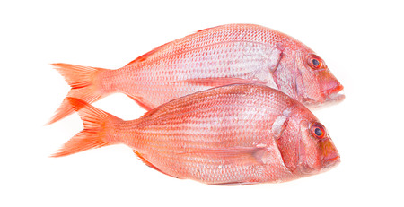 Fish And Seafood - Fresh snapper fish isolated on white. Stock Photo
