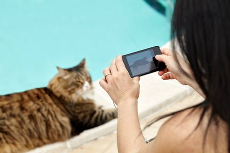 Woman taking photos of her cat with smartphone, closeup view, selective focus. Stock Photo