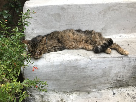 Sick, hungry street cat, lying down on stairs in Calcata Latium, Italy.