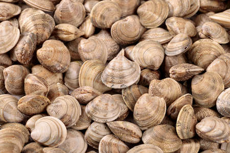 Fresh raw clams one of the main ingredients of the Mediterranean cuisine