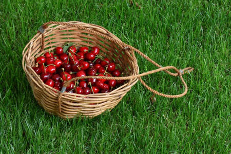 Cherries basket on a green lawn