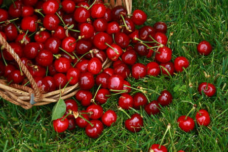 Red cherries in a basket on a green lawn.