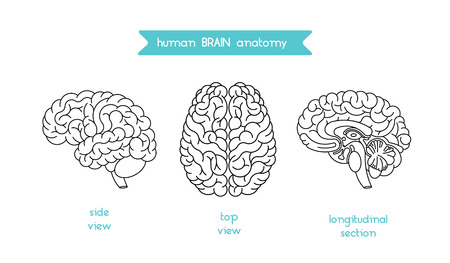cns: Human brain logo. Vector logo of human brain view. Brain outline logo for medical design or education. Vector logo brain isolated on white. Isolated brain top view, side view and section.