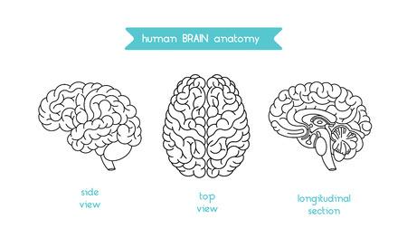 Menselijk brein logo. Vector logo van het menselijk oog de hersenen. Brain schets logo voor medische ontwerp of onderwijs. Vector logo hersenen geïsoleerd op wit. Geïsoleerde hersenen bovenaanzicht, zijaanzicht en doorsnede.