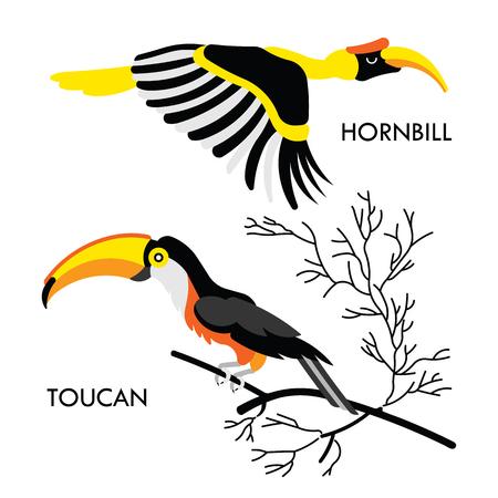 amazon rainforest: Cartoon african wild birds. Vector african birds made in flat style. Isolated wild african Toucan and Hornbill. Cartoon wild birds african background. Isolated vector Toucan. Isolated vector Hornbill.