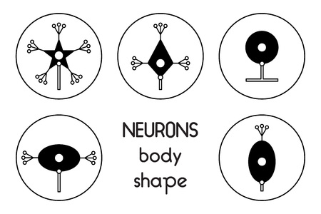 dendrites: The neurons of the brain and spinal cord. Neuron cell biology. Neuron cell body shape. Neuron cell icon.
