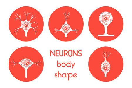 neurone: The neurons of the brain and spinal cord. Neuron cell biology. Neuron cell body shape. Neuron cell icon.