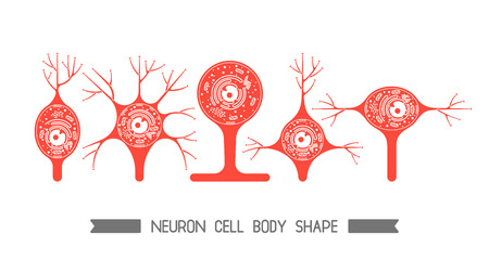 The neurons of the brain and spinal cord. Neuron cell biology. Neuron cell body shape. Neuron cell icon.
