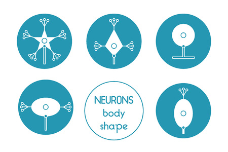 cns: The neurons of the brain and spinal cord. Neuron cell biology. Neuron cell body shape. Neuron cell icon.