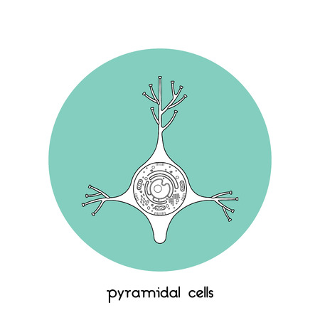 dendrites: Isolated neurone cell biology icon. Neurone cell anatomy structure vector illustration. Axon cell body. Illustration