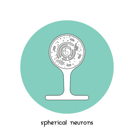 Isolated neurone cell biology icon. Neurone cell anatomy structure vector illustration. Axon cell body. Illustration