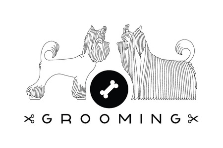 groomer: Vector dog beauty grooming illustration with Yorkshire Terriers. Vector dogt grooming logo. Dog groomer logo.