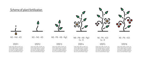 Scheme of fertilization of plants depending on the stage of growth