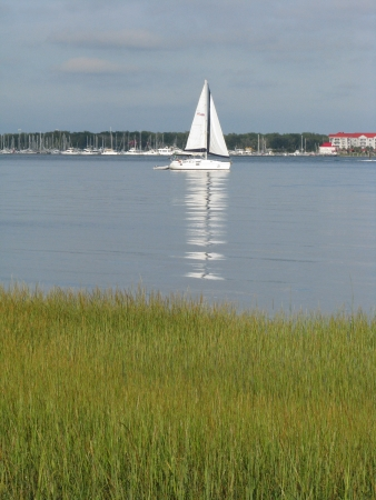 cooper: Small sailboat on the Cooper River in Charleston