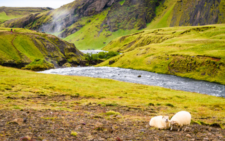 skogafoss waterfall: Icelandic hillside near the Skogafoss waterfall