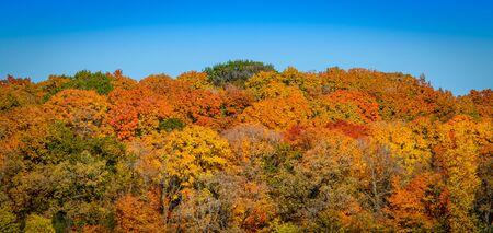 A majectic Autum-colored treeline