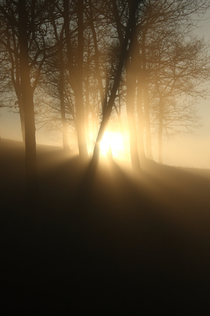 Sunset in a Group of trees with no leafs, casting shadows  in a golden and yellow misty light and a foggy atmosphere generating a mistery and somehow warm feeling 写真素材