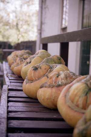 lined up: A row of pumpkins lined up on a bench in front of Charles Darwins house. Stock Photo
