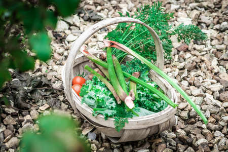 A Basket Of Rhubarb, Kale And Tomatoes Picked From An Allotment, Landscape Orientation