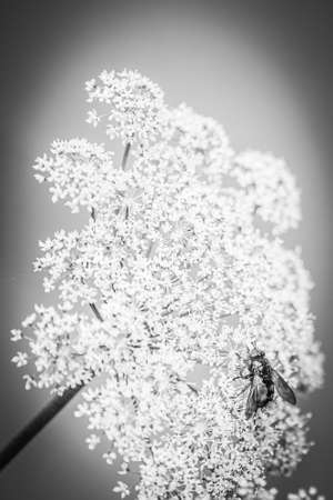 A Fly On A Blossoming Plant, Black And White, Portrait Orientation Stok Fotoğraf
