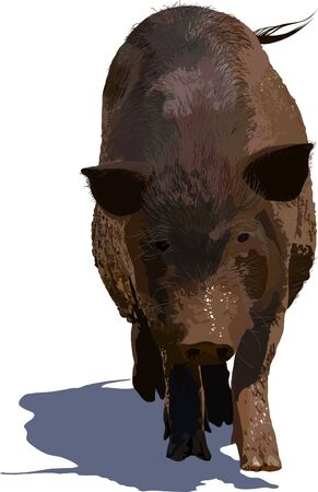 Realistic vector illustration of big dirty pig Stock Vector - 11878665