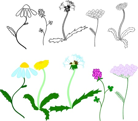 Set of different meadow flowers. Sketches and color illustrations. Vector