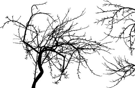 Black silhouette of naked tree and two branches isolated on white background Vector