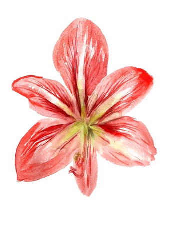 single color image: Watercolor image of red flower isolated on white background