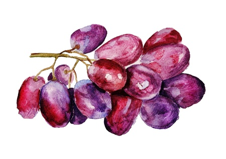 Watercolor image of bunch of red grape isolated on white background photo