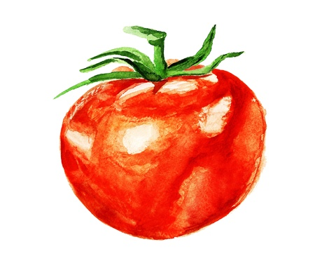 Watercolor image of tomato isolated on white background