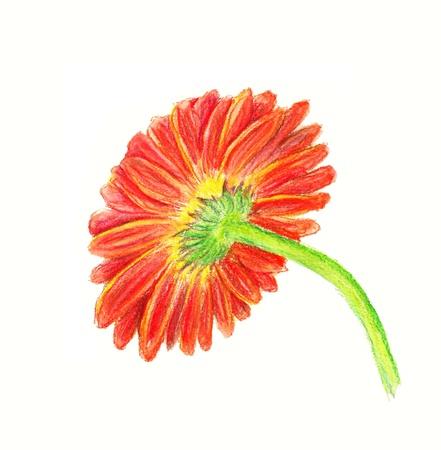 backside: Watercolor image of backside of marigold isolated on white background