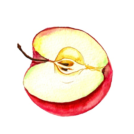 Watercolor image of half of red apple
