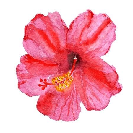 赤いハイビスカスの花の水彩画のイメージ 写真素材