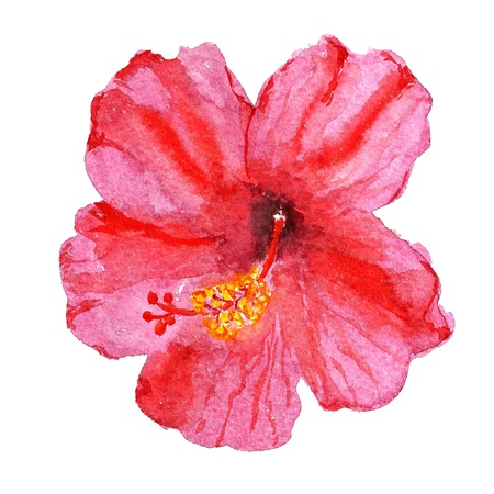 Watercolor image of flower of red hibiscus photo