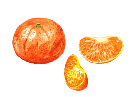 Watercolor image of mandarin with two segments