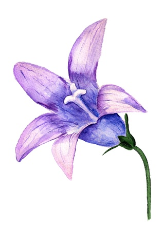 Watercolor image of violet flower of bluebell