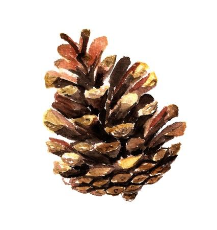 Pine cone: Image d'aquarelle de pomme de pin sur fond blanc