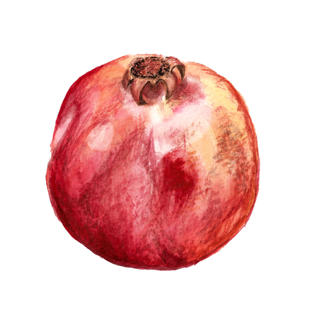 Watercolor image of pomegranate photo