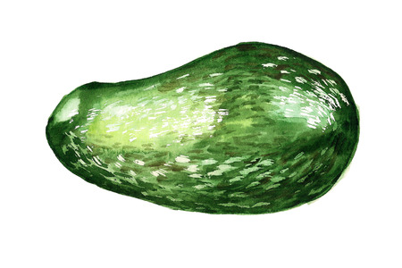 Watercolor image of avocado on white background