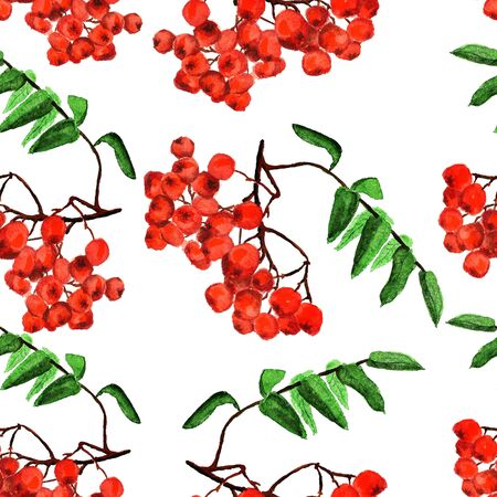 Seamless pattern with bunches of rowan on white background