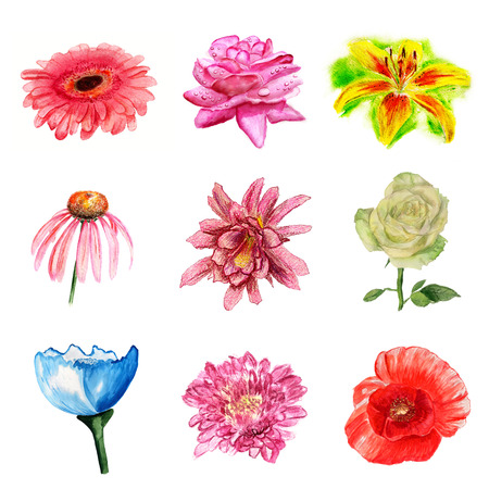 Set of watercolor flowers on white background