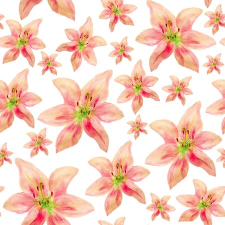 Seamless pattern with watercolor images of pink lilies on white background Stock Photo