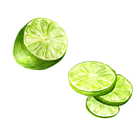 lime: Watercolor image of half of lime and slices on white background