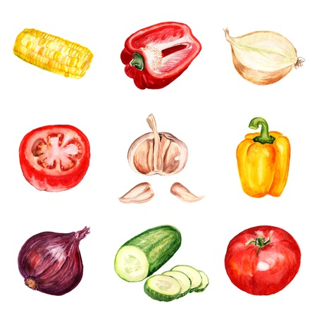 Set of watercolor images of vegetables on white background.  Reklamní fotografie