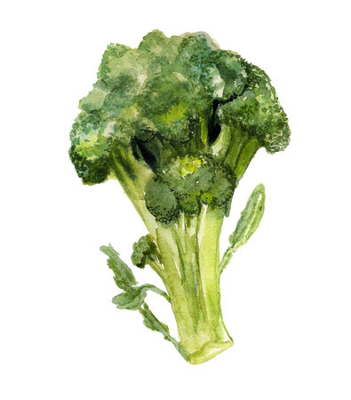 insipid: Watercolor image of broccoli on white background Stock Photo