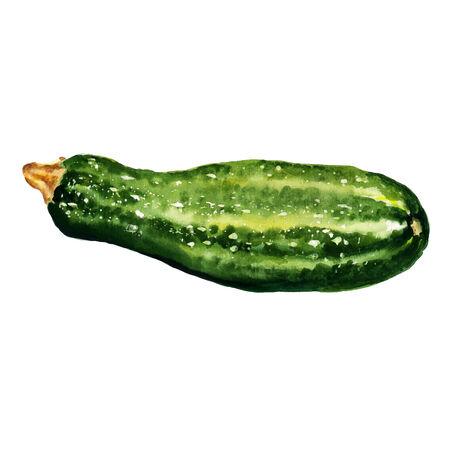 zucchini: Watercolor image of zucchini on white background Illustration